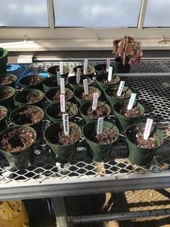 Plants in Progress